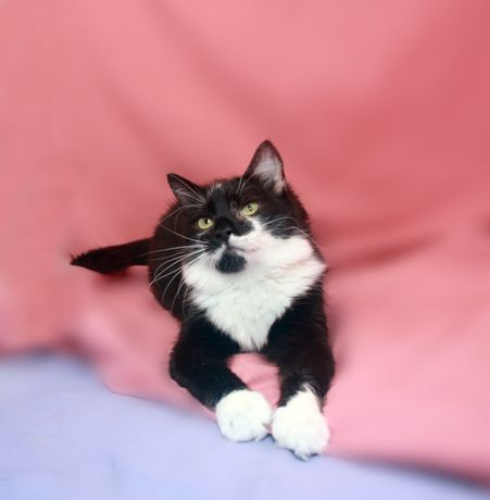 Кошечка Бонита (кот, кошка, котенок)