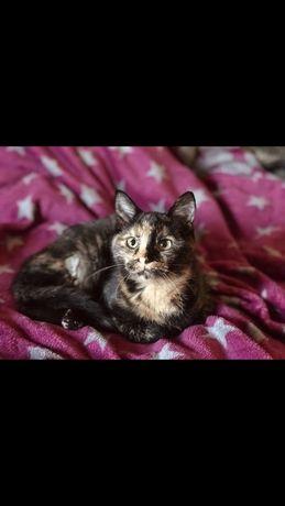 Brzoskwinka półroczna kotka do adopcji
