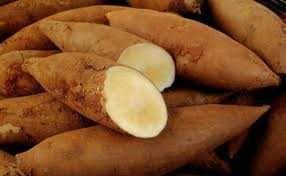 Yacon biológico - Fruta, legume e medicamento
