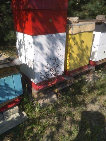 Pszczoły, odkłady