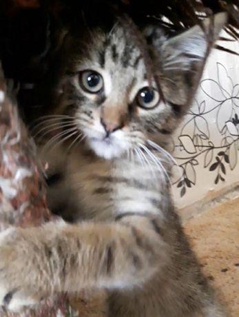 Котик и кошечка. Кот. Кошка. Котята.