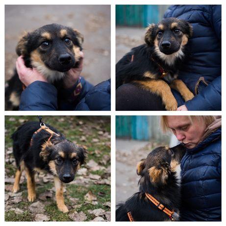 Бесплатно: небольшая Собачка Ванда,7 мес , стерилизована
