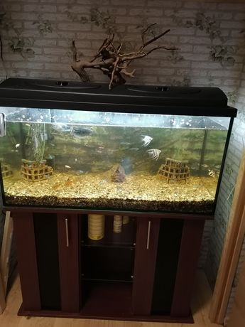 Akwarium 200L plus szafka,wyposażenie i dodatki