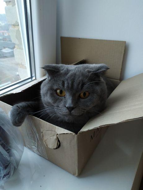 Кіт для в'язки