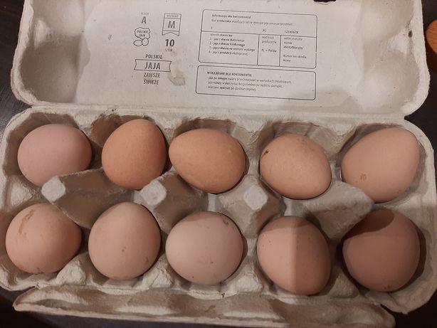 Jaja lęgowe perliczka biała