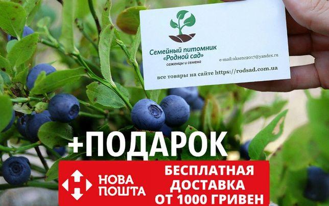 Черника обыкновенная семена 20 шт насіння на саджанці саженцы +подарок