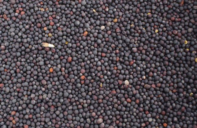 Rzepak, zboże produkty rolne