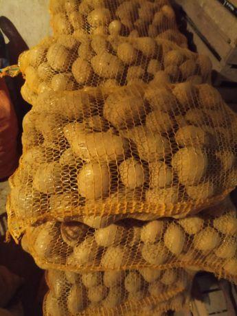 Ziemniak jadalny Vineta Tajfun Brydza