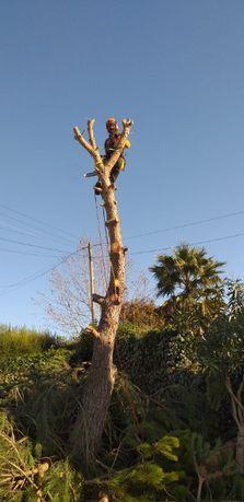 Árvores - Podas e Abates