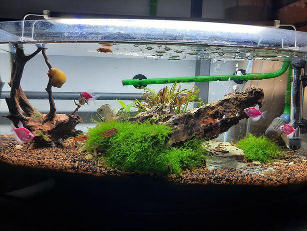 Akwarium 60 L kompletne Rybki Filtr