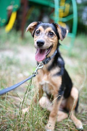 Собака Мони 4 месяца щенок, пёс собачка