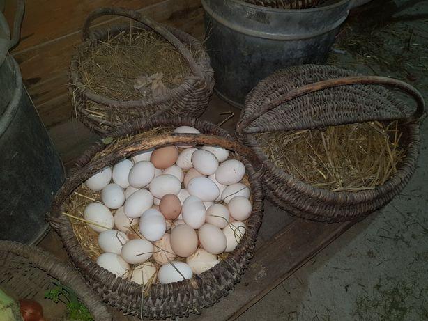 Jaja świeże z Podlasia