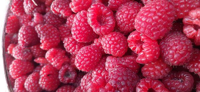 Maliny owoc cena za kg prosto z pola