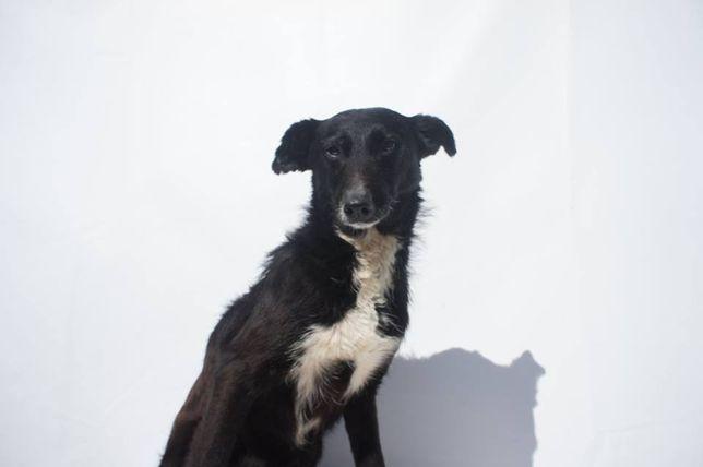 Meg - cadela já esterilizada