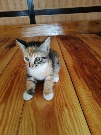 Котята, Возьмите себе друга