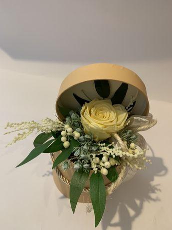 Wieczna róża żółta