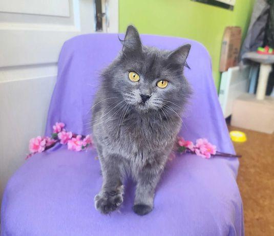 Красотка кото-подружка Алеся, 1 годик, кошка, кот, стерилизована