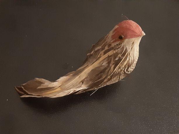 Птица для коллекционеров