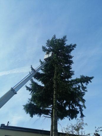 Wycinka drzew - malowanie dachów. cały Śląsk
