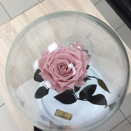 Роза в Колбе +коробка,гравировка.Тренд 2020 года