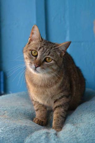 полосатий котичок плюшик з полосатою шубкою 1р