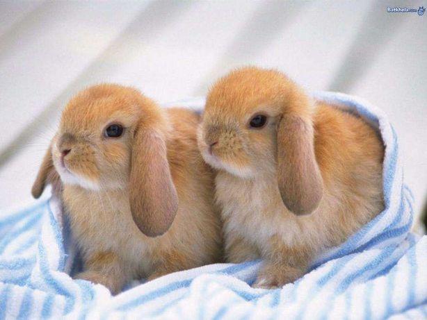 Карликовые декоративные кролики разных окрасов