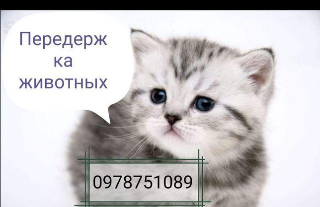 Передержка животных (дёшево НО ПРОФИСИОНАЛЬНО!)