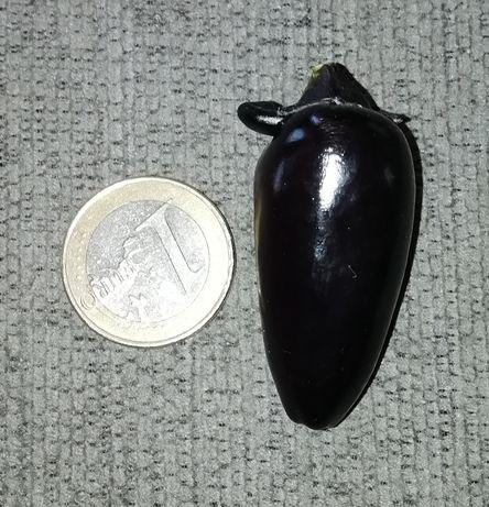 Vendo sementes/planta malaguetas count Drácula