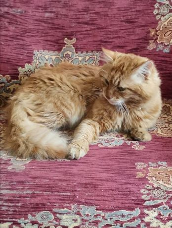 Потерялся рыжий кот. Нашедшему вознаграждение!