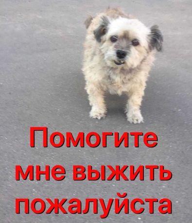 Помогите собаке выжить.