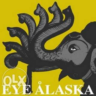 Eye Alaska - Yellow & Elephant