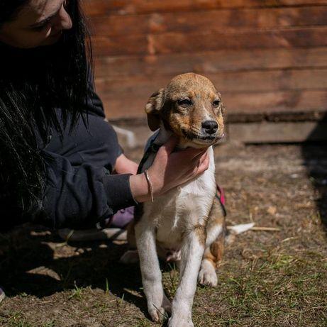 Малыш Скуби 4 месяца щенок щеня собака собачка пёс песик