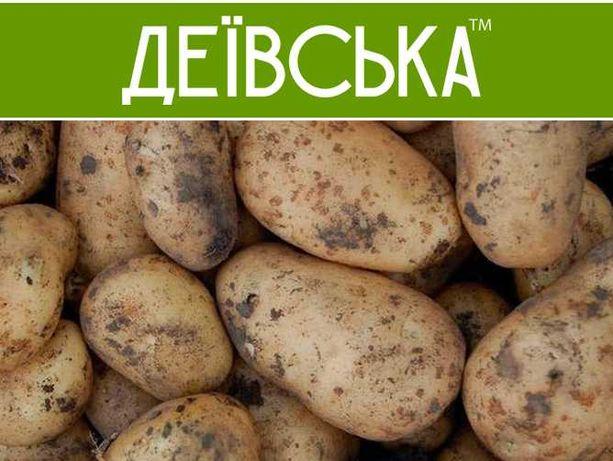 Картопля молода (виробники)