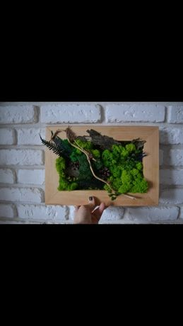 Фітокартини із стабілізованого моху, декор стін стабілізованим мохом