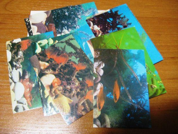 набор открыток-календариков Аквариумные рыбки