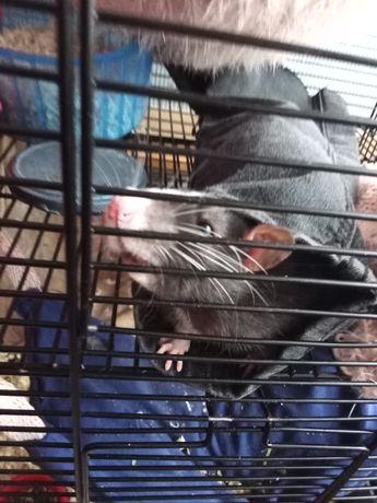 Sprzedam szczurki z klatką