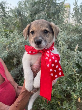 Щеночек бесплатно ( щенки щенок собака )