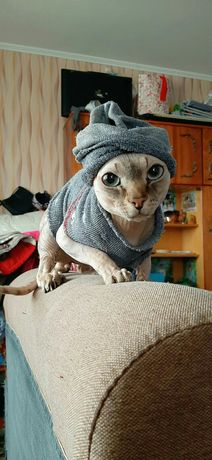 Продаю кота СРОЧНО!!!