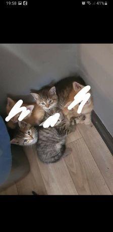 PILNE! Oddam kotki w dobre ręce!