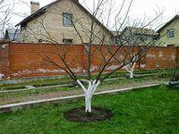 Обрезка плодовых деревьев кустов