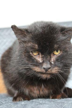 Kot Dionizy z Fundacji Kocia Klitka - szuka domu