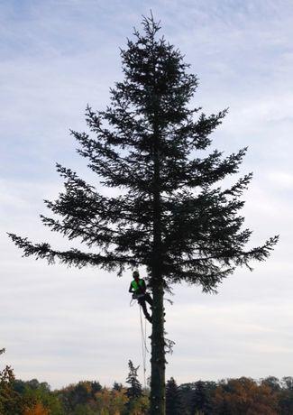 cięcie i przycinanie drzew, zrębkowanie gałezi