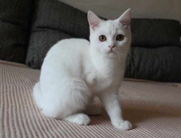 Котенок мальчик с тремя лапами (6 месяцев) ищет семью