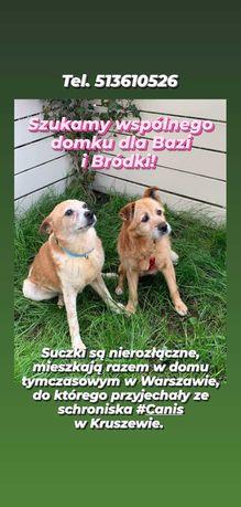 Prosimy, podaruj -Bazince i Bródce-szansę na lepsze życie!
