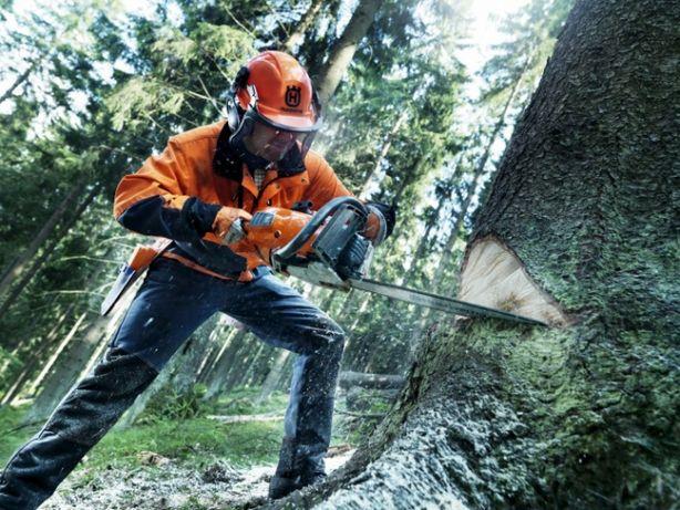 Спилим ваши деревья