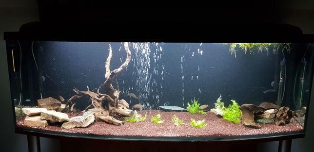 Akwarium panoramiczne zestaw (aquael, eheim)