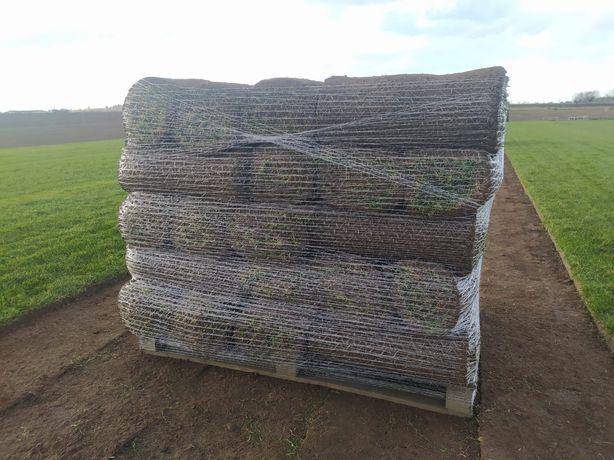 Trawa z rolki rolce trawnik