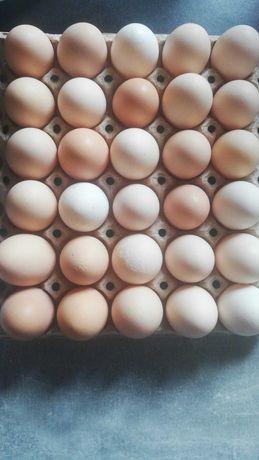 Sprzedam jaja wiejskie