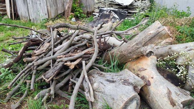 Drzewo drewno na opał średnica 70cm około 4m3 Kasztan