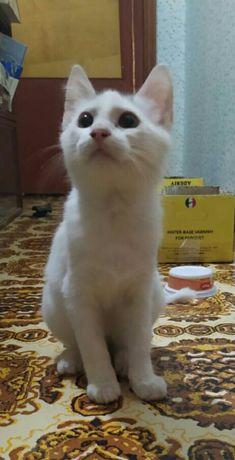 Отдам бесплатно котика белого.